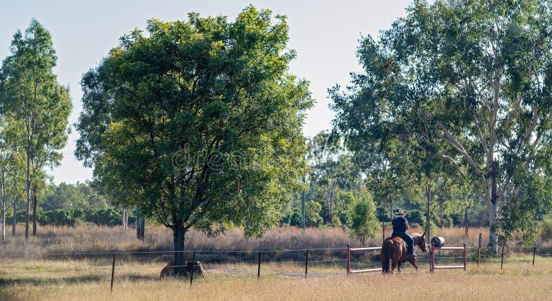 Hästrygg Rider Leisurely Checking Fence Line arkivfoto
