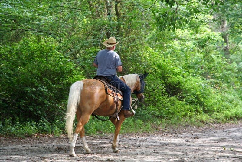 hästryggmanridning royaltyfri foto