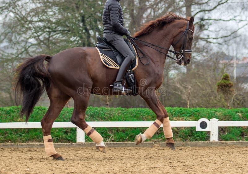 Hästryggridning, älskvärd ryttare arkivfoto