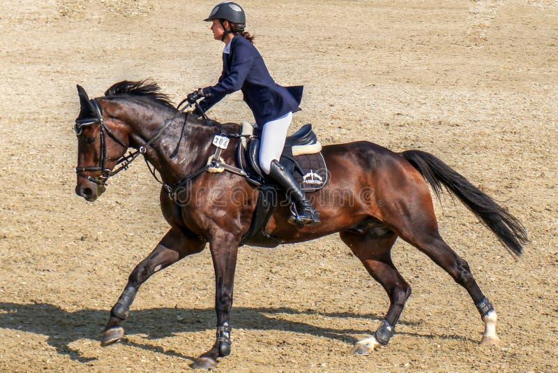 Hästryggridning för ung kvinna på brun häst royaltyfri foto