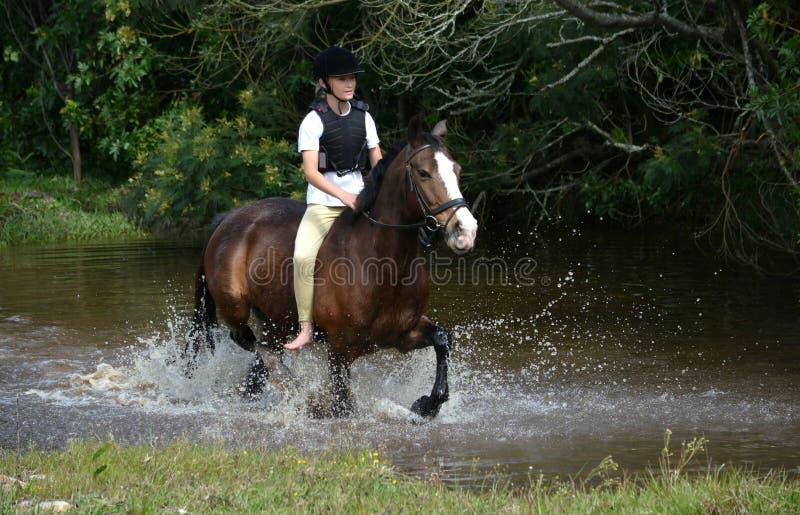 Hästryggridning i natur royaltyfri fotografi