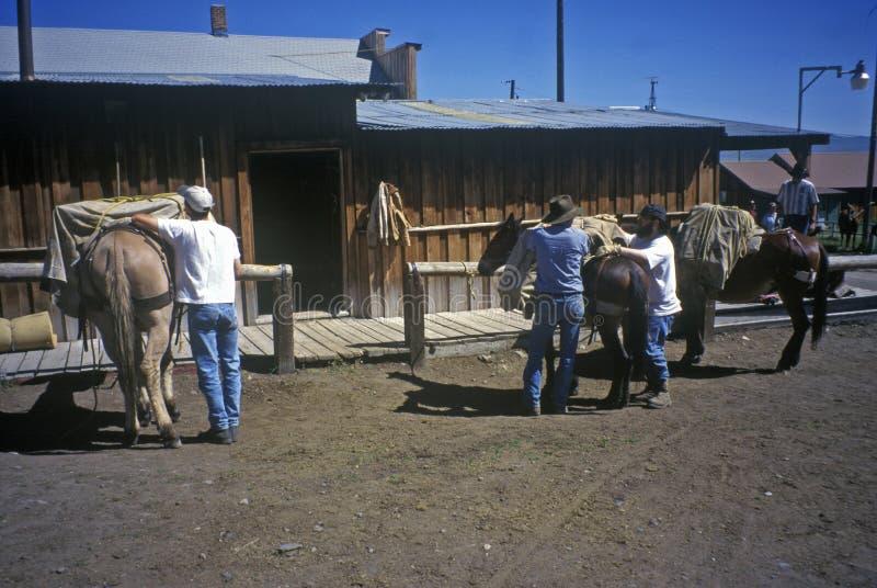 Hästryggridning, Lakeview, MT royaltyfri foto