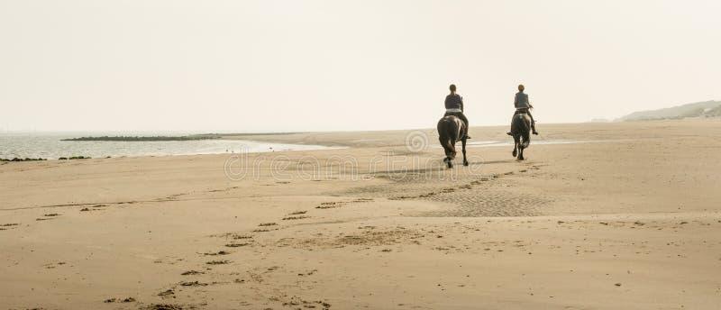 Hästryggridning på stranden tidigt på morgonen royaltyfria foton