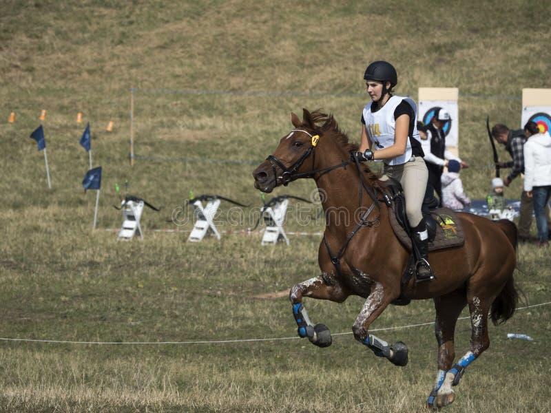 Hästryttare som konkurrerar i händelsen för argt land royaltyfri foto