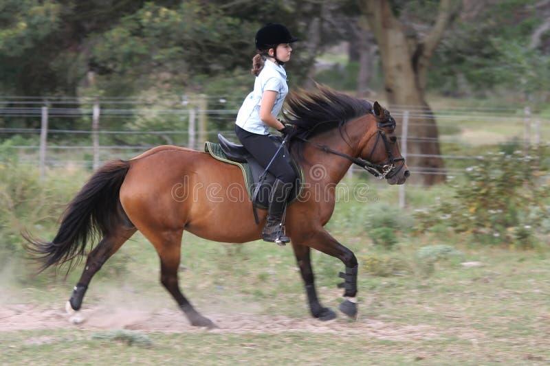 hästryttarebarn royaltyfria bilder