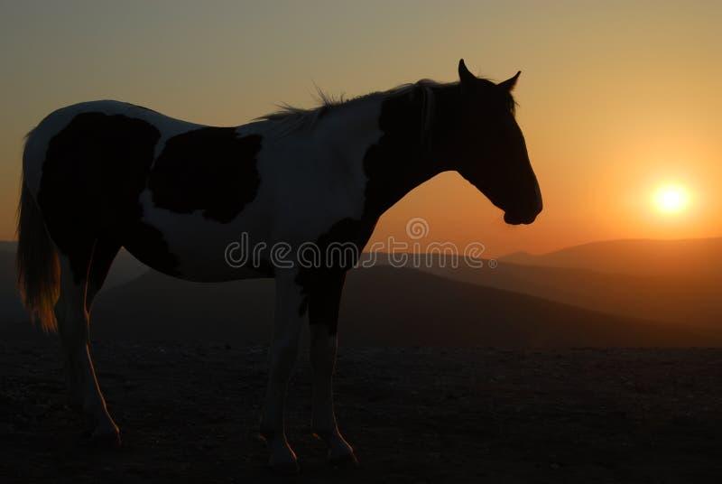 hästsilhouette arkivfoto