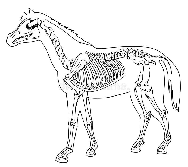 Hästskelett stock illustrationer