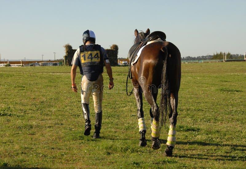 hästskicklig ryttare royaltyfri bild