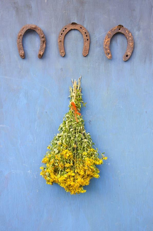 Hästsko- och för gruppSt Johns wort blommor för tre antikvitet på väggen royaltyfri foto
