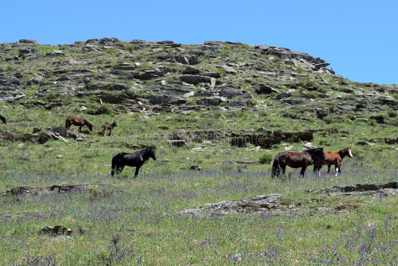 Hästskrubbsår i bergen arkivfoto