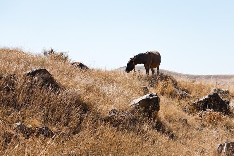 Hästskrubbsår i Zorats Karer i Armenien arkivfoto