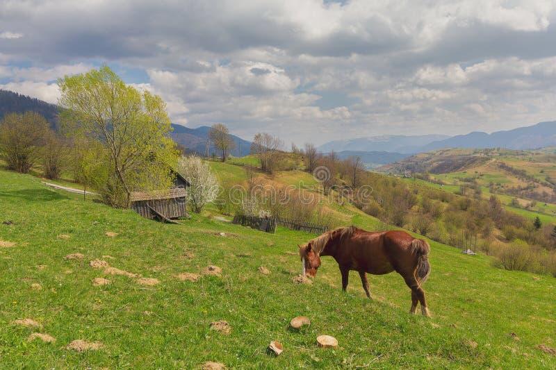 Hästskrubbsår på ett berg betar carpathians arkivfoto