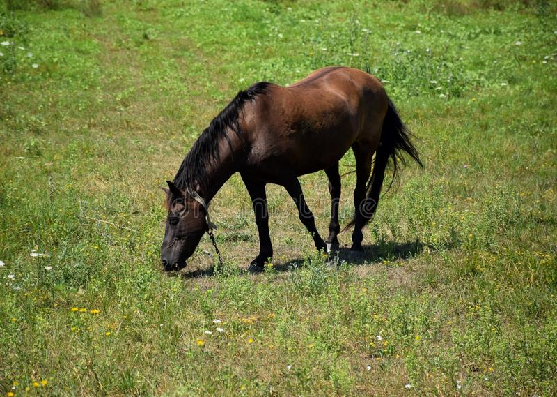 Hästskrubbsåren arkivfoto