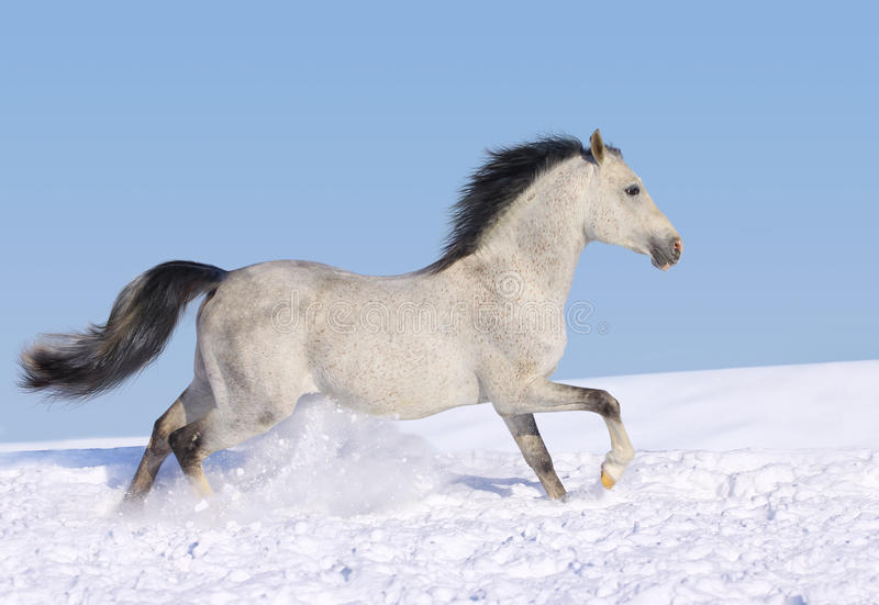 hästsnow arkivfoton