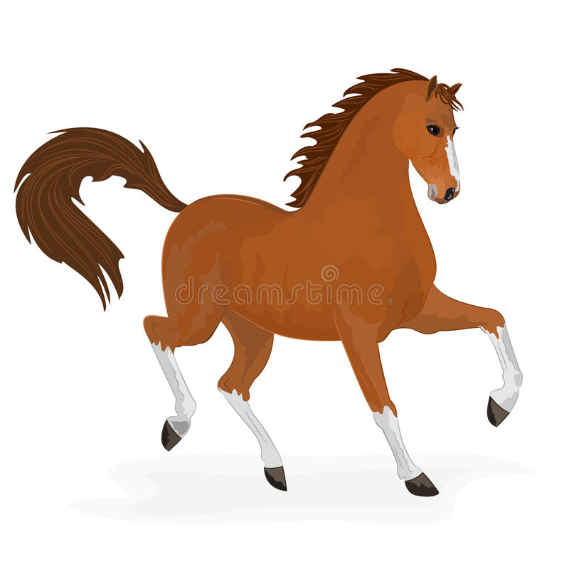 Hästspring royaltyfri illustrationer