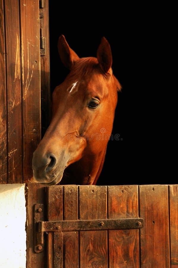 häststående royaltyfri fotografi