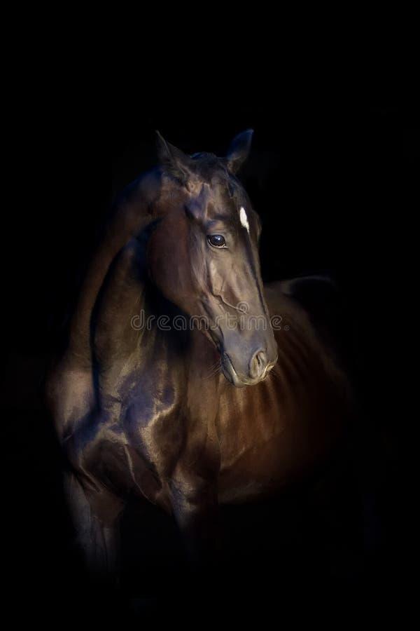 Häststående på svart arkivfoto