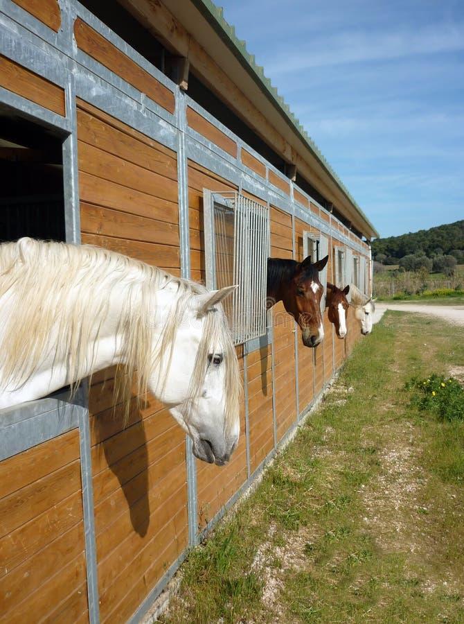 häststall fotografering för bildbyråer