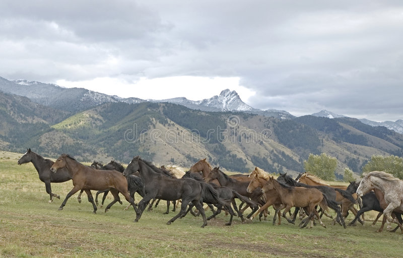 häststampede royaltyfri fotografi