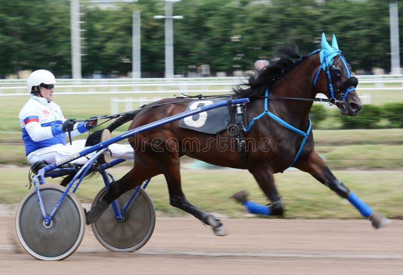 Hästtravareavel i rörelseabstrakt begreppsuddighet royaltyfria bilder