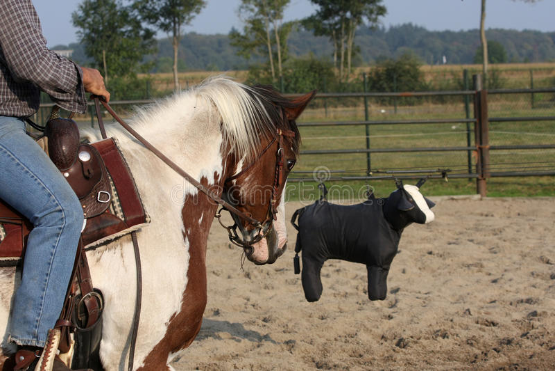 hästutbildning royaltyfria bilder