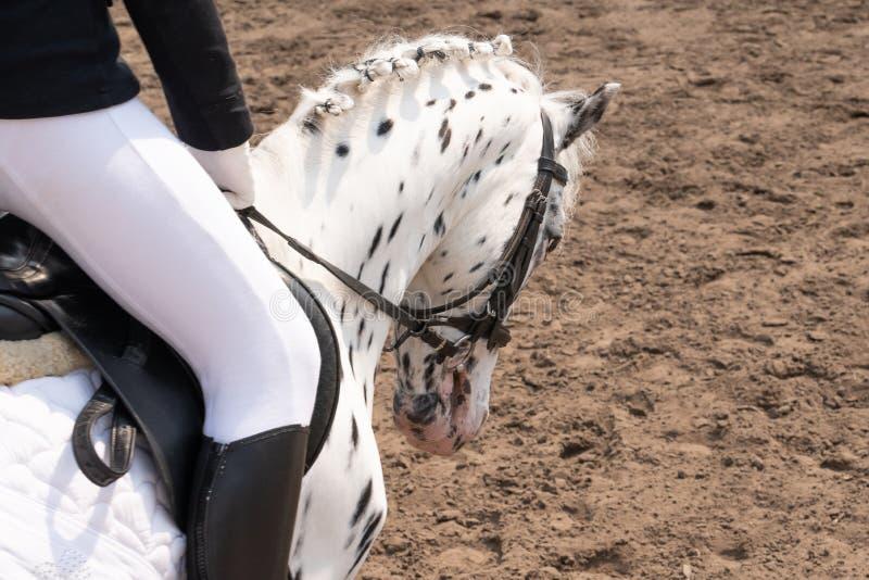 hästutbildning i stallet Head n?rbild royaltyfri foto