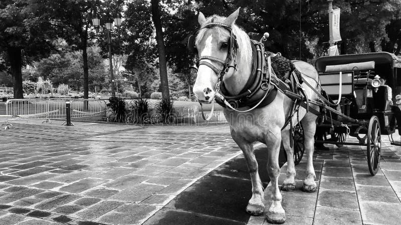 Hästvagn royaltyfria foton