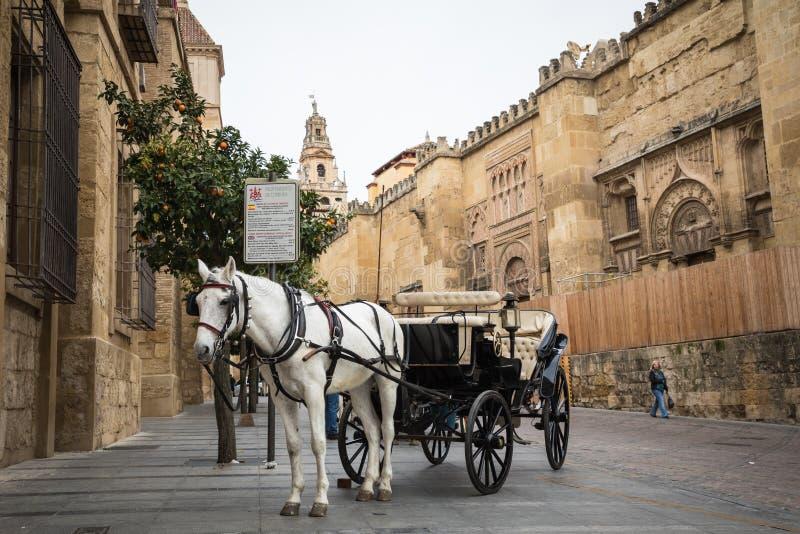 Hästvagn framme av domkyrkan i Cordoba, Spanien fotografering för bildbyråer
