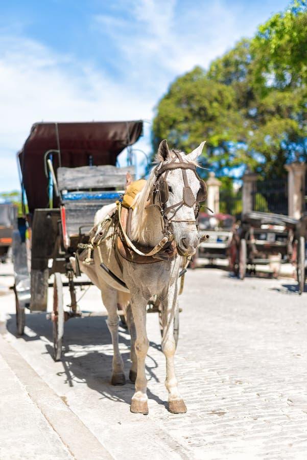 Hästvagn i gammal havannacigarr royaltyfri foto