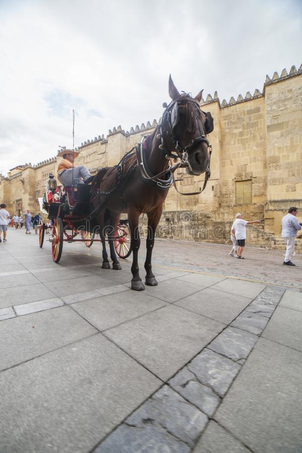 Hästvagn nära den stora moskén, Cordoba, Spanien royaltyfri bild
