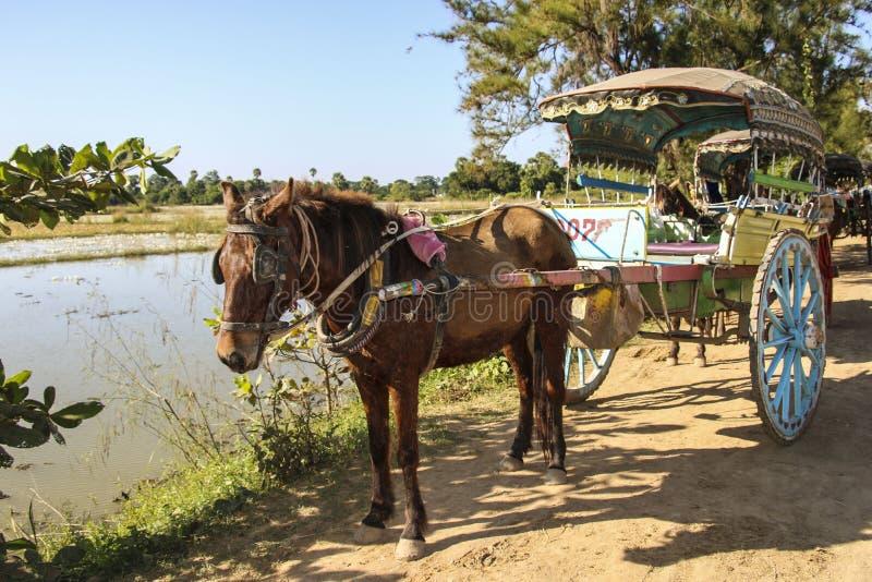Hästvagn på Bagan Archaeological Zone, Myanmar Burma fotografering för bildbyråer