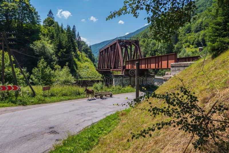 Hästvagnsbortgång under en bro på vägen nära skogen royaltyfri foto