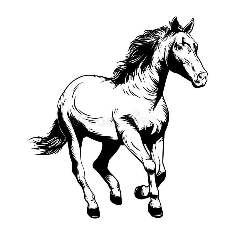 Hästvektorillustration Hästvektorillustration nordlig pyatigorsk tävlings- russia för caucasus hippodromehäst Teckning nordlig py royaltyfri illustrationer