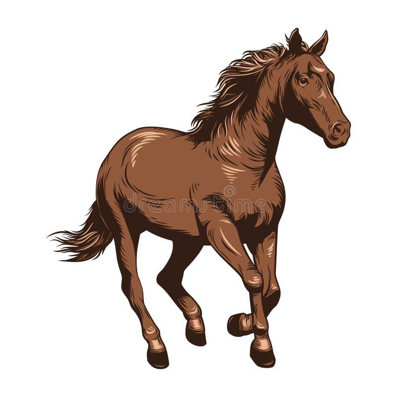 Hästvektorillustration nordlig pyatigorsk tävlings- russia för caucasus hippodromehäst Teckningshäst i färg stock illustrationer