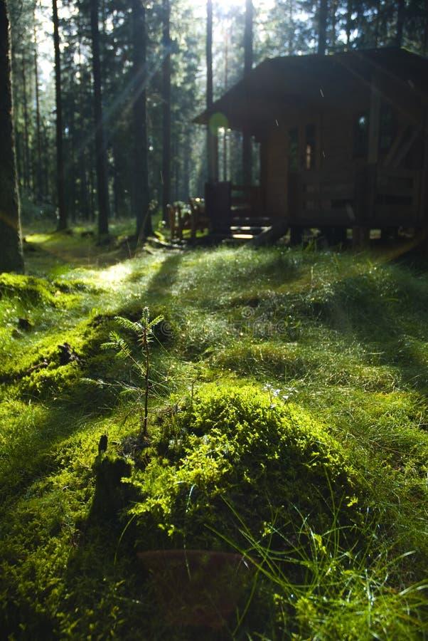 Häuschen im Holz stockfotos