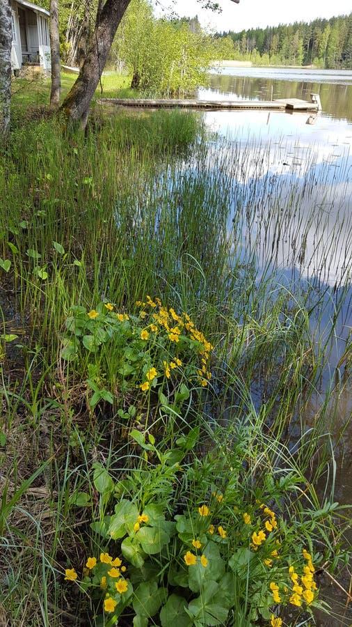 Häuschenstrand Waterweed stockbild