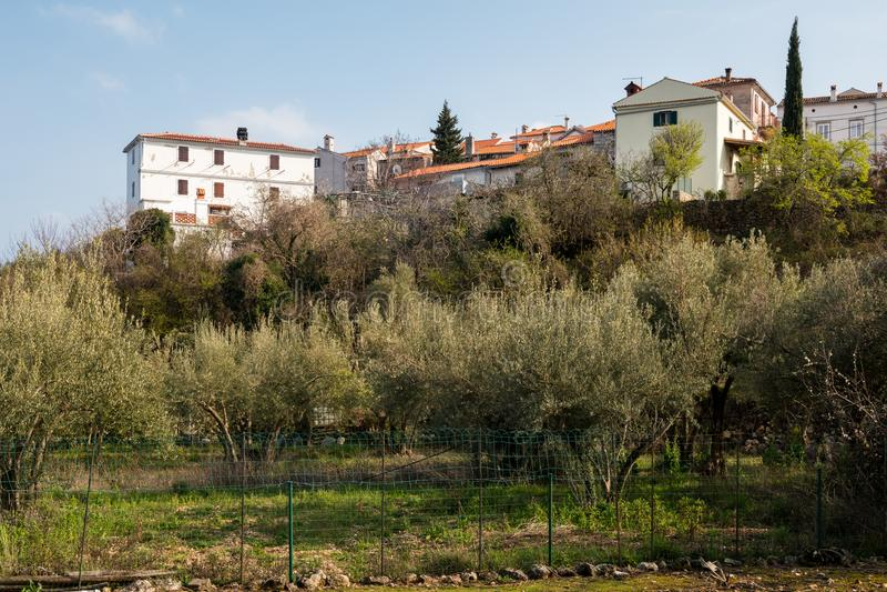 Häuser und Olivenhain von Beli an einem sonnigen Tag im Frühjahr lizenzfreie stockfotografie