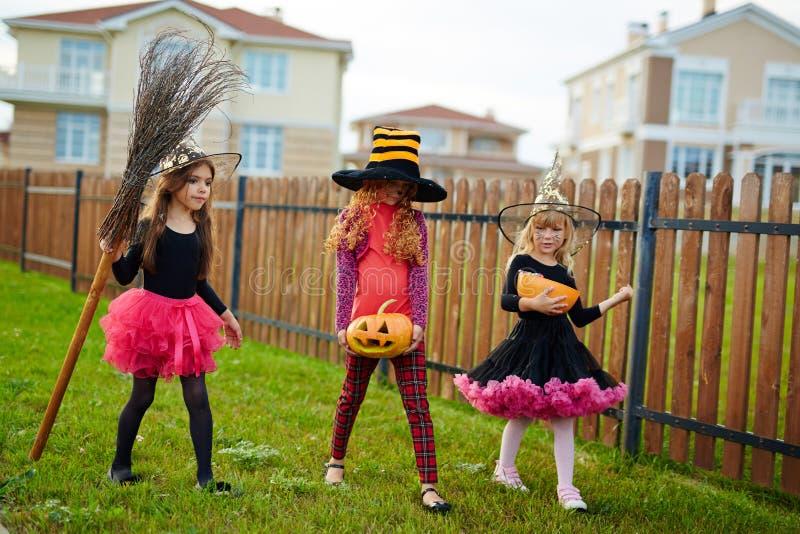 Häxor av halloween royaltyfri foto