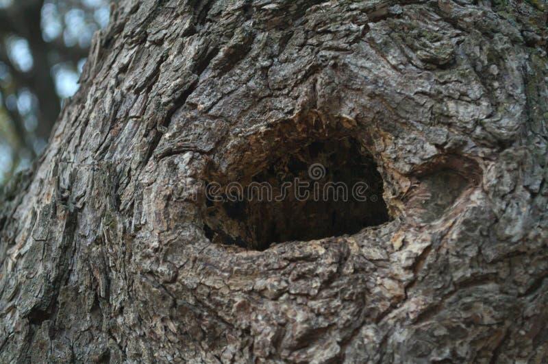Hål i trädmateriel, övre sikt för slut arkivfoton