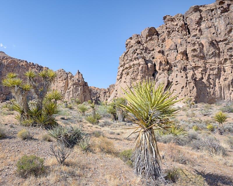 Hål-i--vägg Bansheekanjon, nationell sylt för Mojave, CA royaltyfria foton