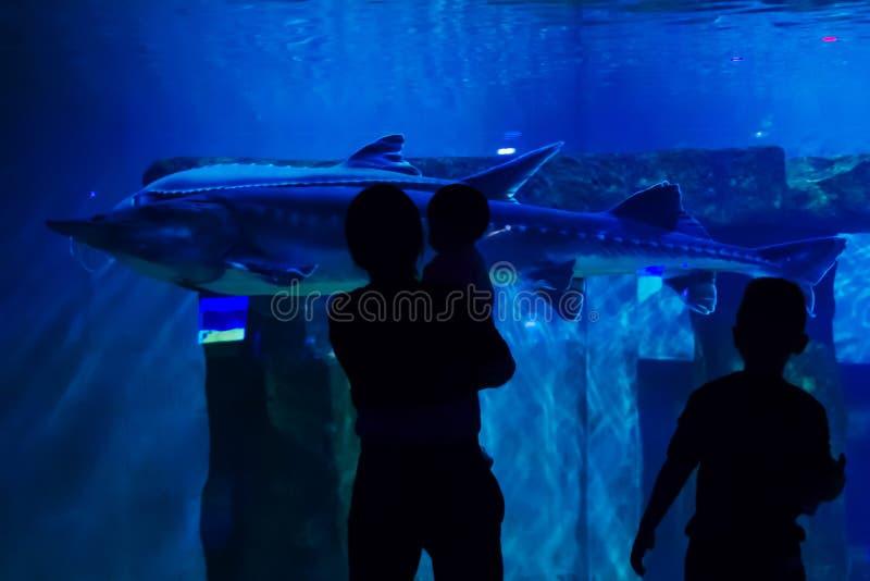 H?ll ?gonen p? hajarna i akvariet royaltyfri bild