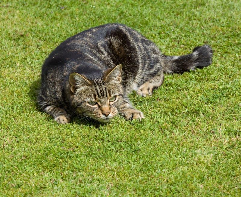 hålla ögonen på för katt royaltyfria bilder