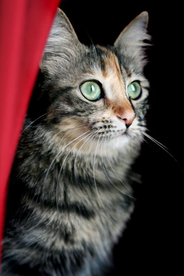 hålla ögonen på för katt royaltyfri foto