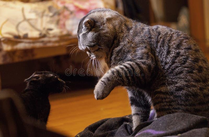 Hålla sig borta katten royaltyfria bilder