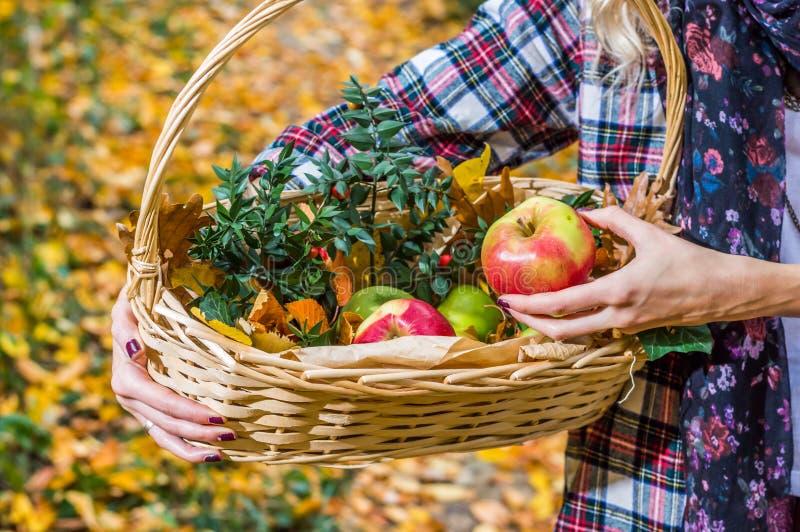 hållande äpple för flicka och korgen royaltyfri bild
