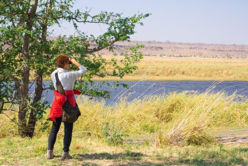 Hållande ögonen på djurliv för turist vid binokulärt botswansk gräns på för den Chobe floden, Namibia, Afrika Chobe nationalpark, fotografering för bildbyråer