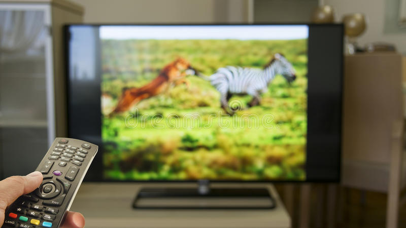 Hållande ögonen på djurlivdokumentär hemma royaltyfria bilder