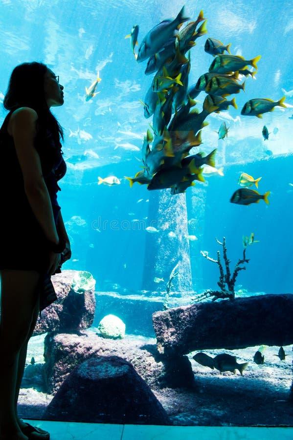 Hållande ögonen på fisk för flicka; Hålla ögonen på för fisk arkivfoto