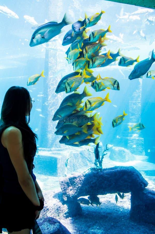 Hållande ögonen på fisk för flicka; Hålla ögonen på för fisk royaltyfria foton