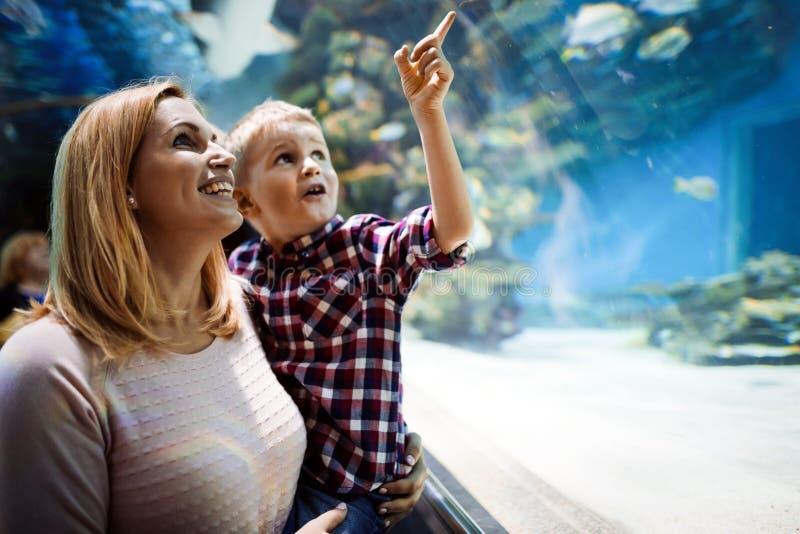 Hållande ögonen på havsliv för moder och för son i oceanarium royaltyfri bild